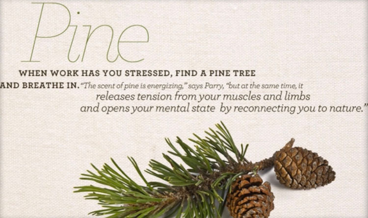 Pine smell